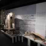 Im Eisbärenclub